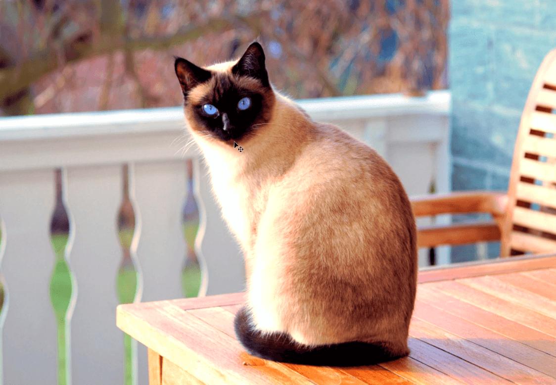 fotografía de gato