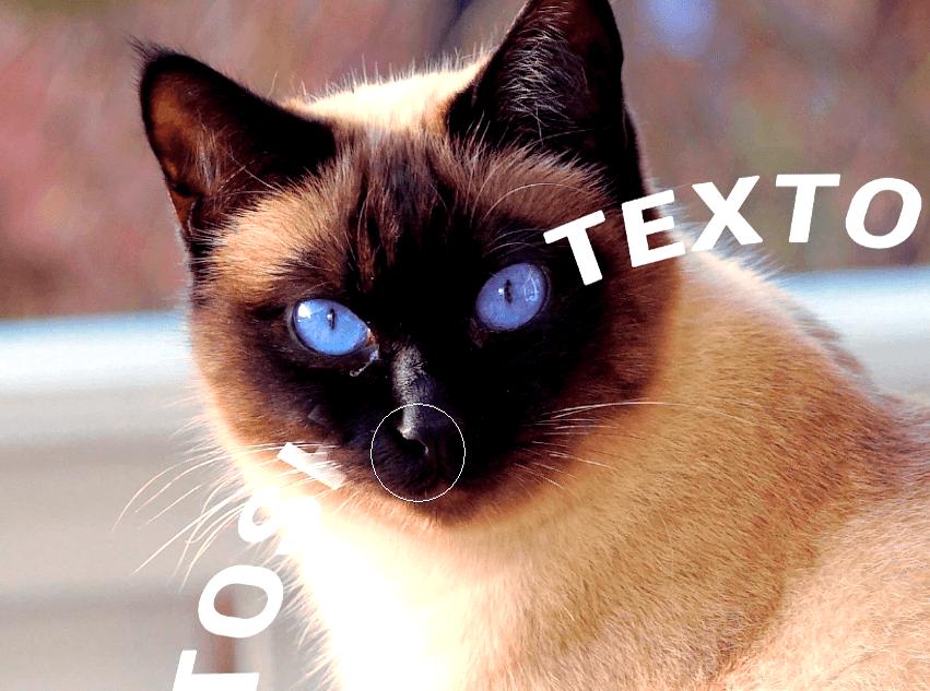 borrando parte de texto en cara de gato
