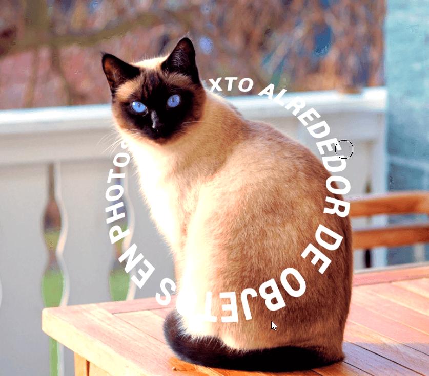 texto alrededor del gato